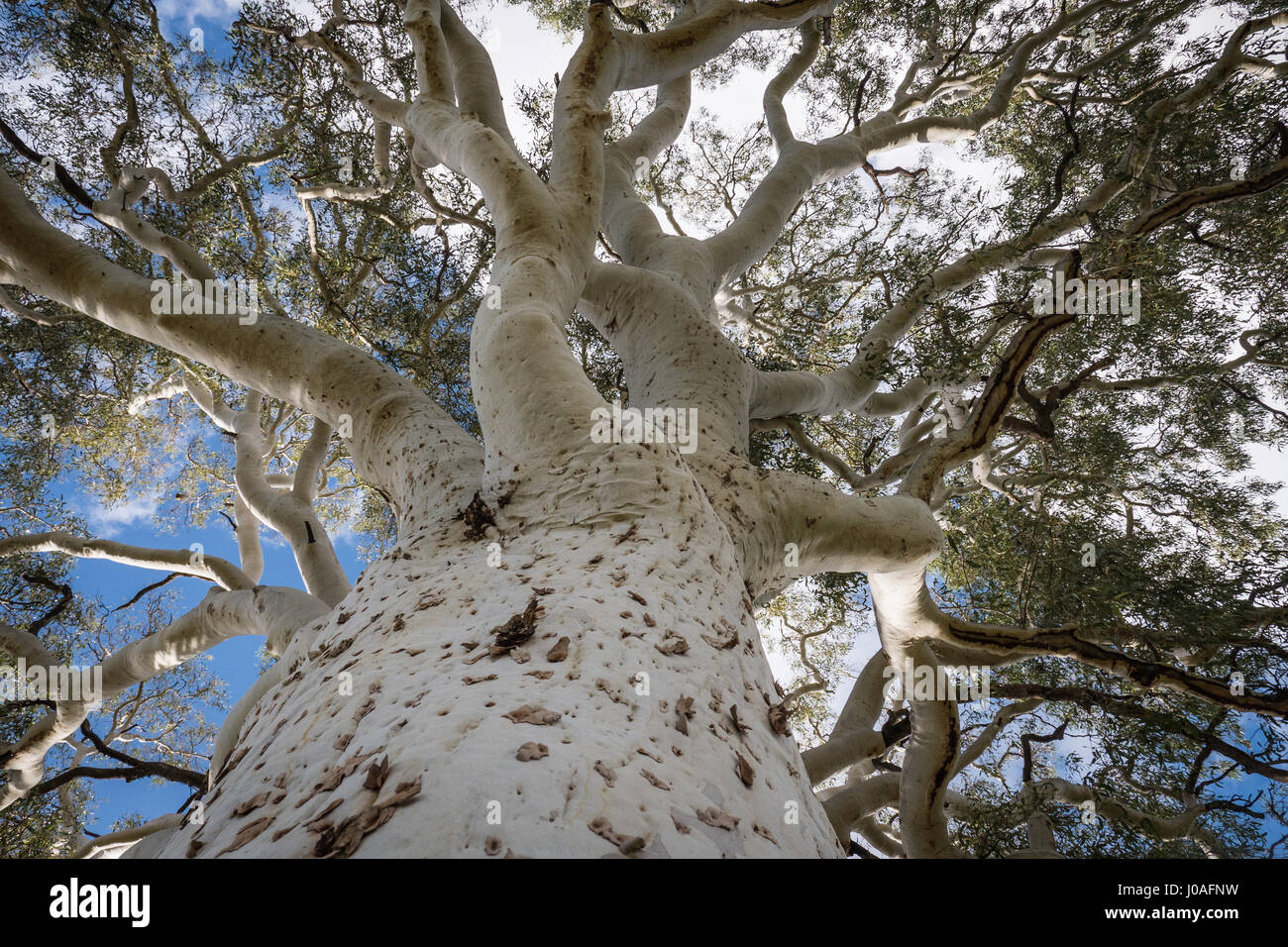 Alice springs Simpsons Gap ghost gum Northern Territory - Stock Image
