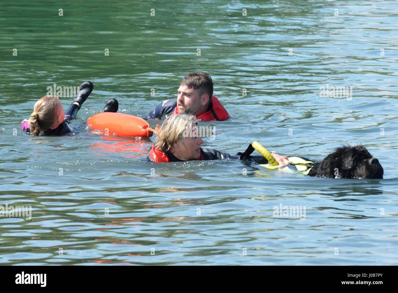 Newfoundland Rescue Dog Stock Photos Amp Newfoundland Rescue