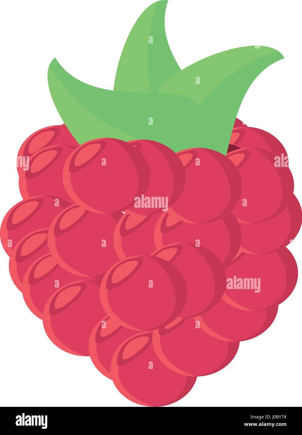 raspberry fruit food healthy Stock Vector