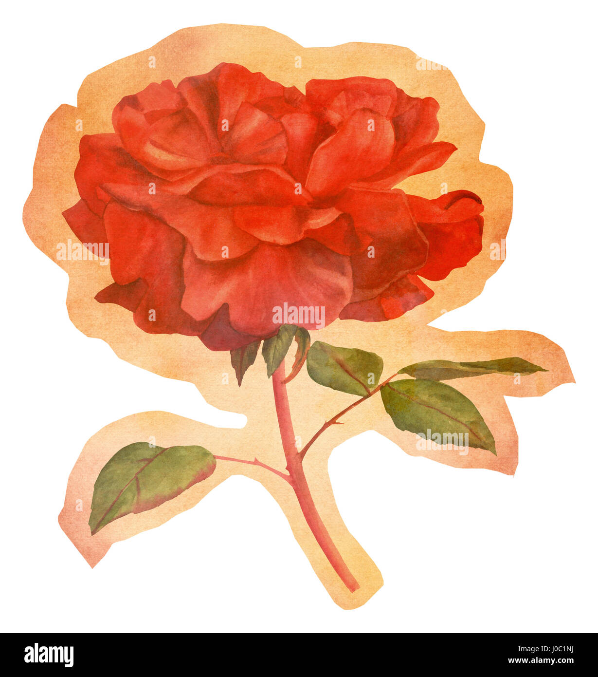 Cutout watercolor red rose on faded old paper - Stock Image