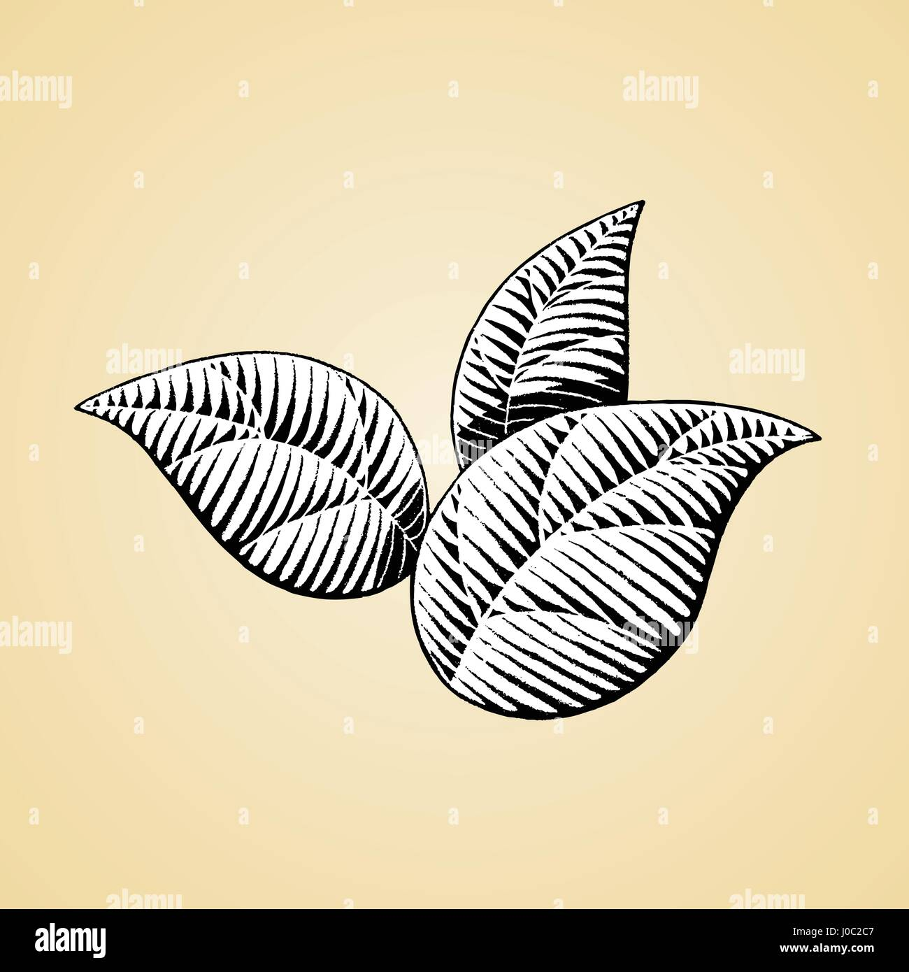 Vector Illustration of a Scratchboard Style Ink Drawing of Leaves with White Fill - Stock Vector