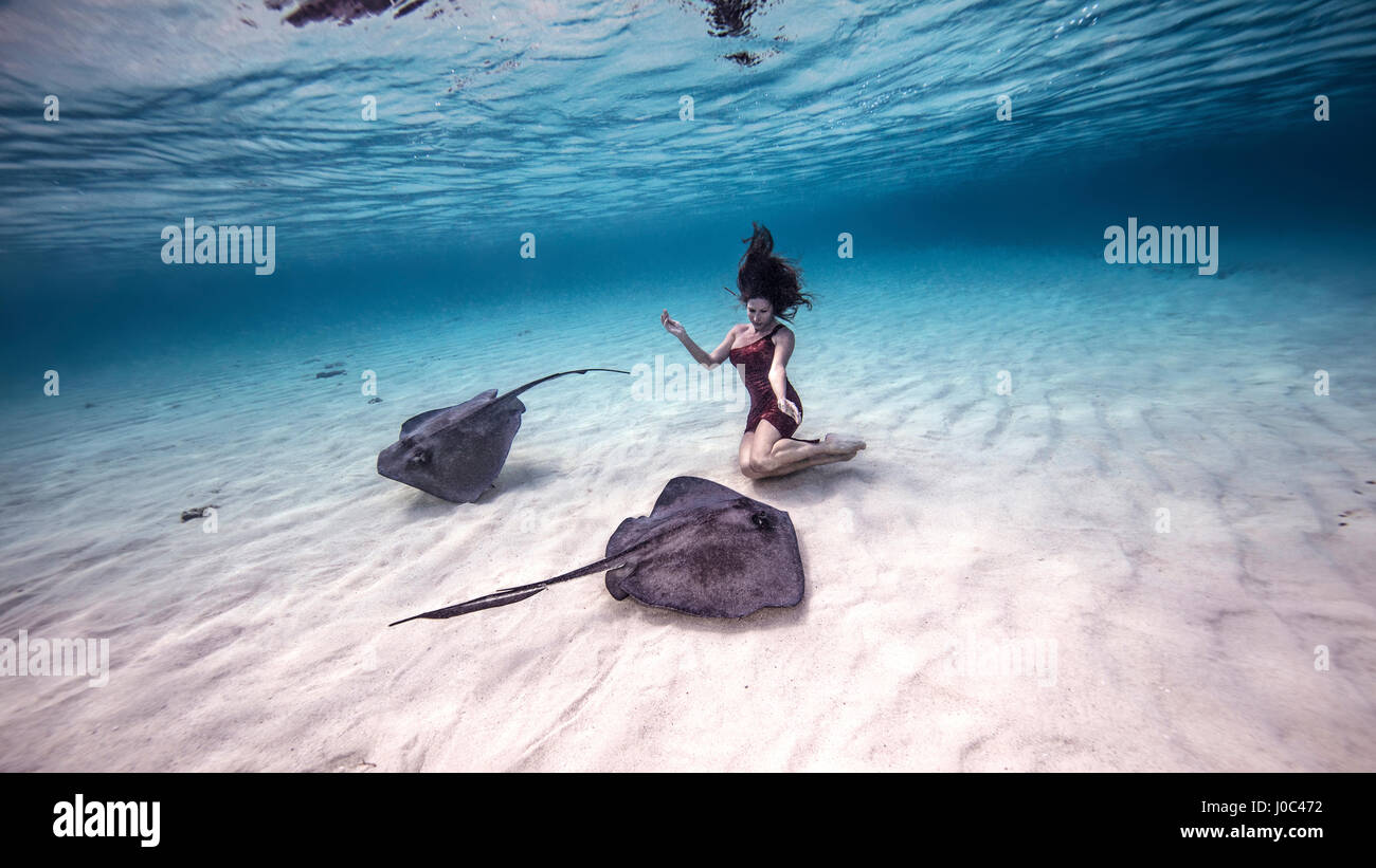 Female free diver kneeling near stingrays on seabed - Stock Image