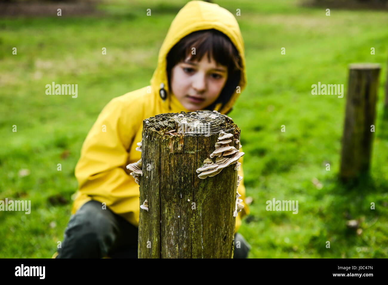 Boy in yellow anorak looking at park fencepost - Stock Image