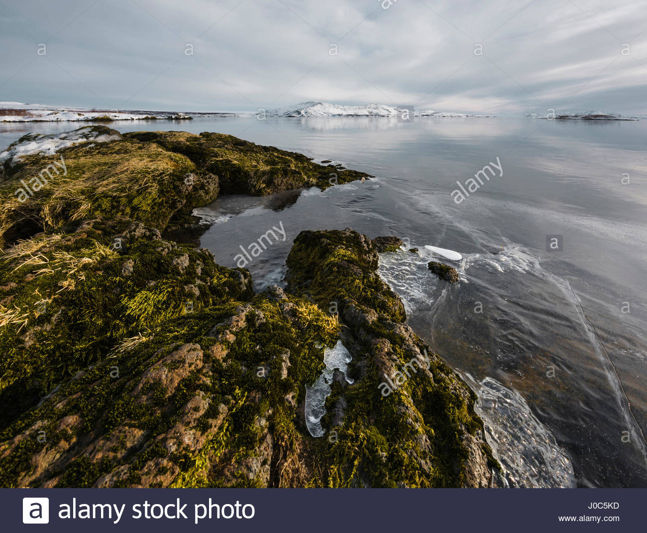 Ice on lake rocks at water's edge, Thingvallavatn, Iceland - Stock Image
