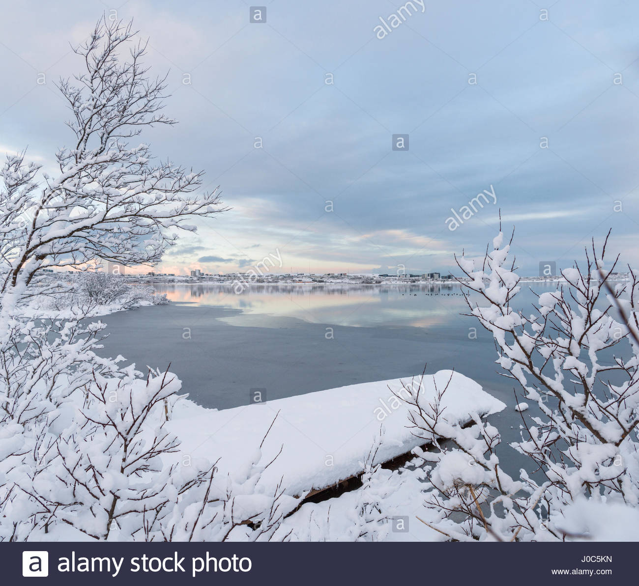 Snow covered bushes on water's edge at Lake Ellidavatn, Iceland - Stock Image