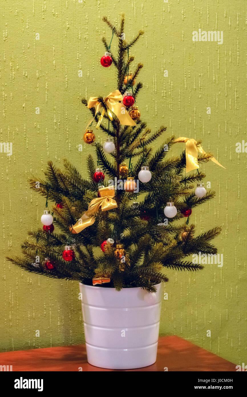 Christmas Tree In Pot Stock Photos & Christmas Tree In Pot Stock ...