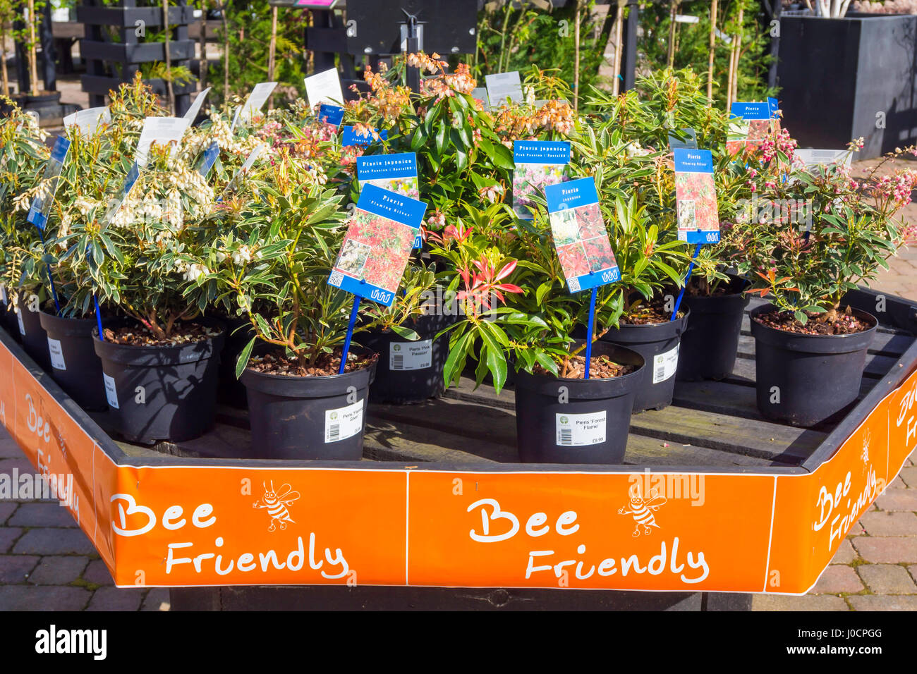 A display of Bee Friendly plants for sale in a Garden Centre here Pieris Japonica, 'Pink Passion' and Pieris - Stock Image
