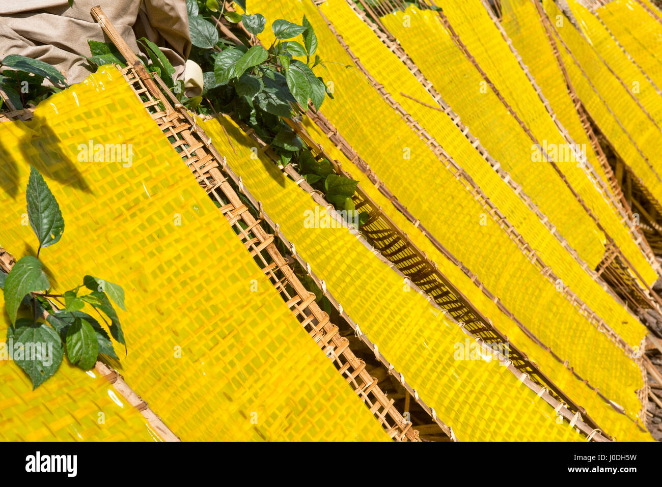 Horizontal close up of traditional yellow rice noodles in sheet form drying out in the sunshine in Vietnam. - Stock Image