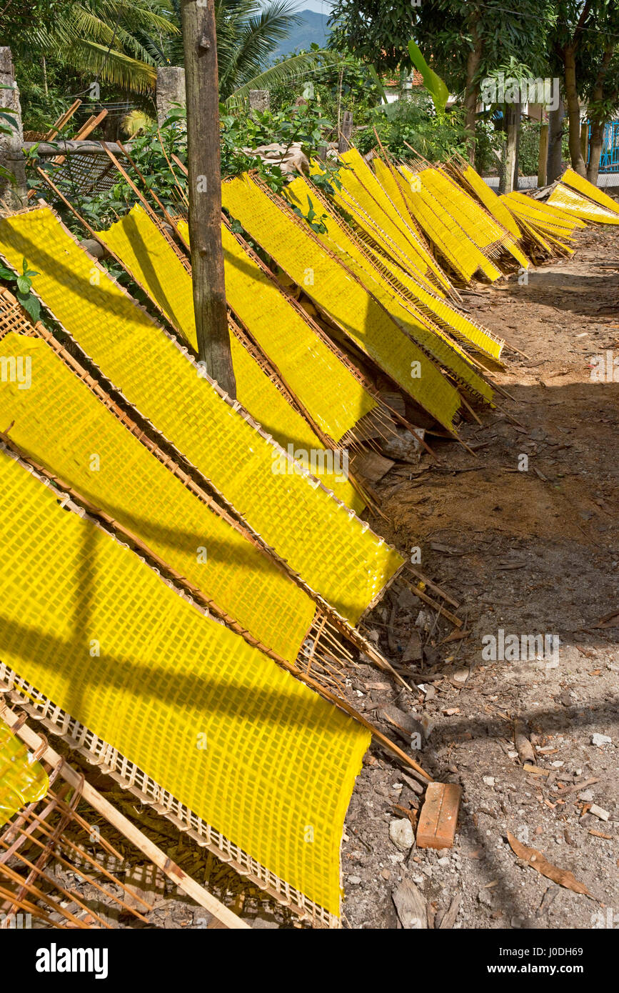 Vertical view of traditional yellow rice noodles in sheet form drying out in the sunshine in Vietnam. - Stock Image