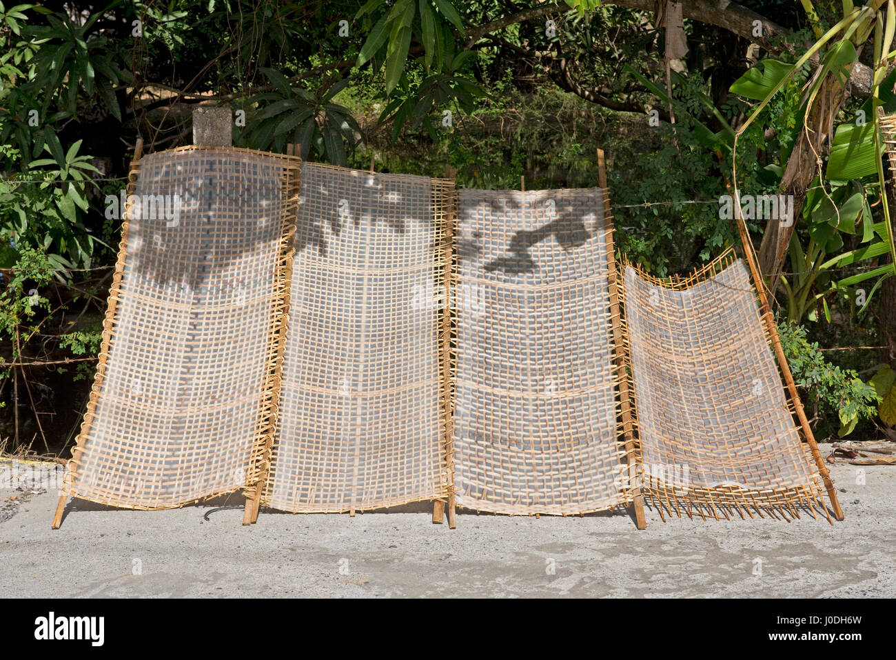 Horizontal view of traditional white rice noodles in sheet form drying out in the sunshine in Vietnam. - Stock Image