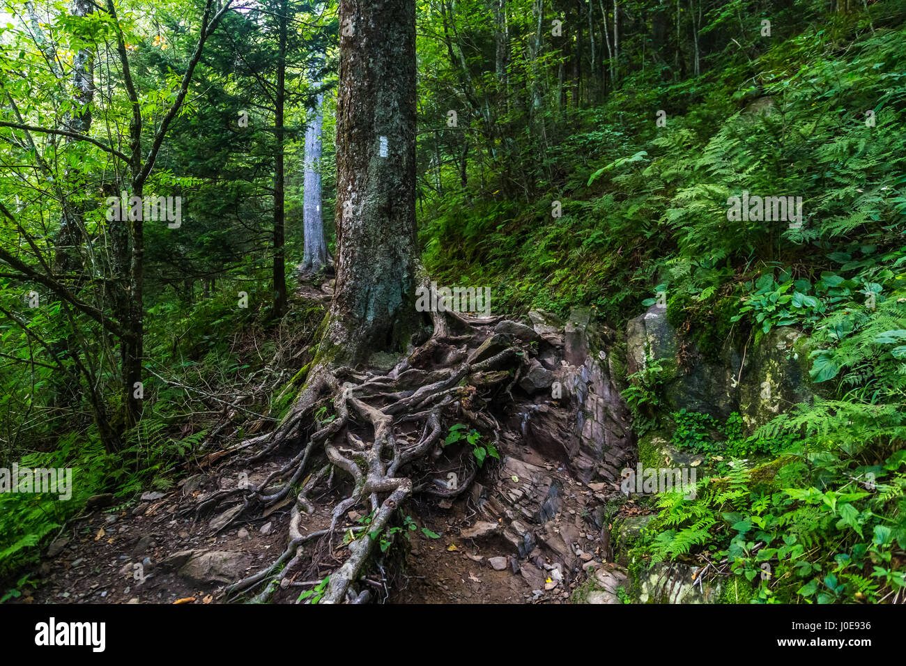 The Appalachian Trail as it crosses the Smoky Mountains in North Carolina and Tennessee. - Stock Image