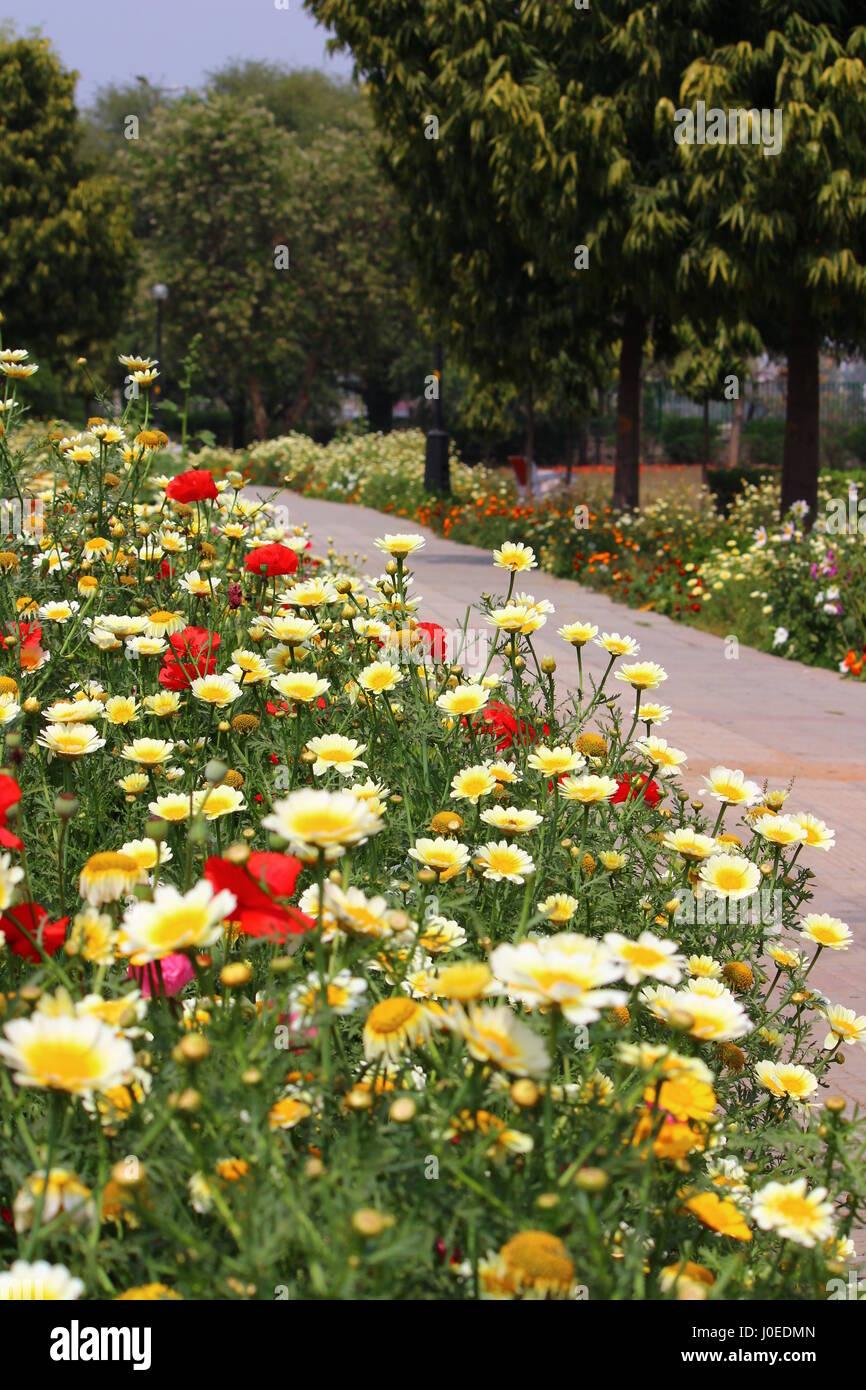 Spring Flowers At Japanese Park Delhi India Stock Photo 138001045