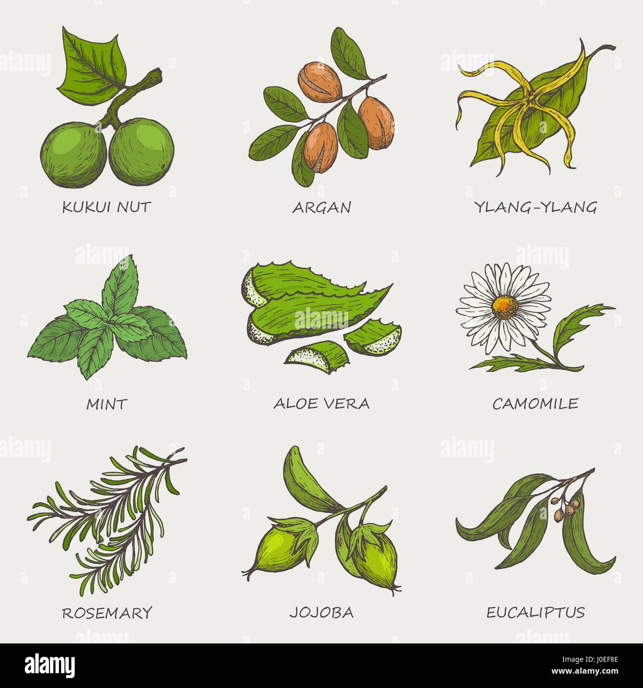 Set of herbs and plants hand drawn icons that are used in cosmetics and natural medicine. Vector illustration - Stock Vector