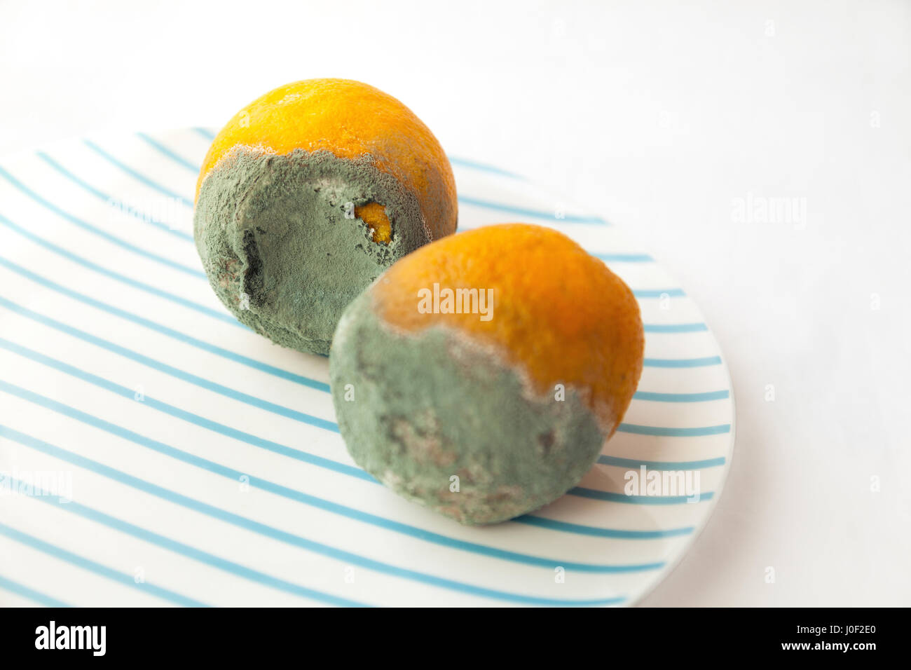 Two rotten oranges covered with blue mold. Beautiful spoiled food: citrus fruit on a plate. Shallow focus - Stock Image