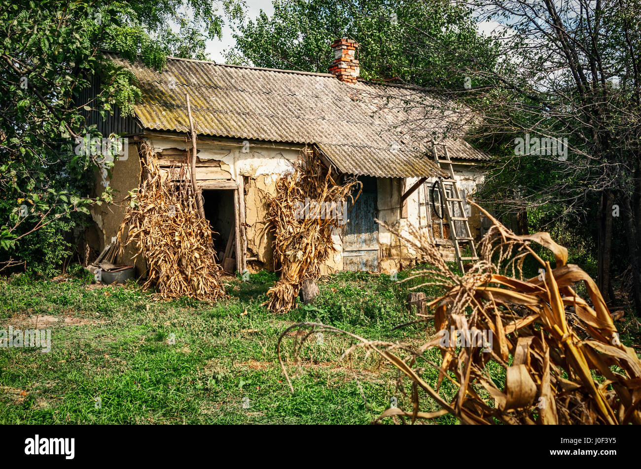 Old village house in forest environment - Stock Image