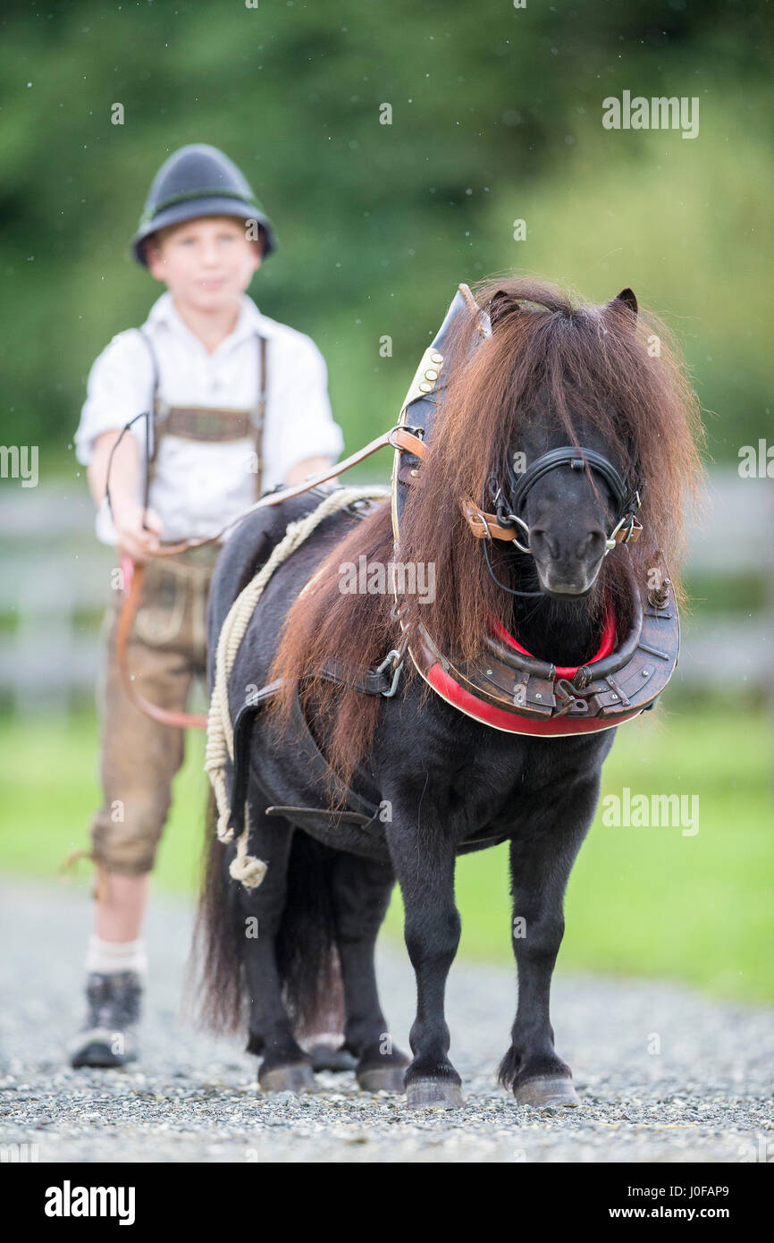 Bavarian boy with Shetland Pony in collar harness. Bavaria, Germany
