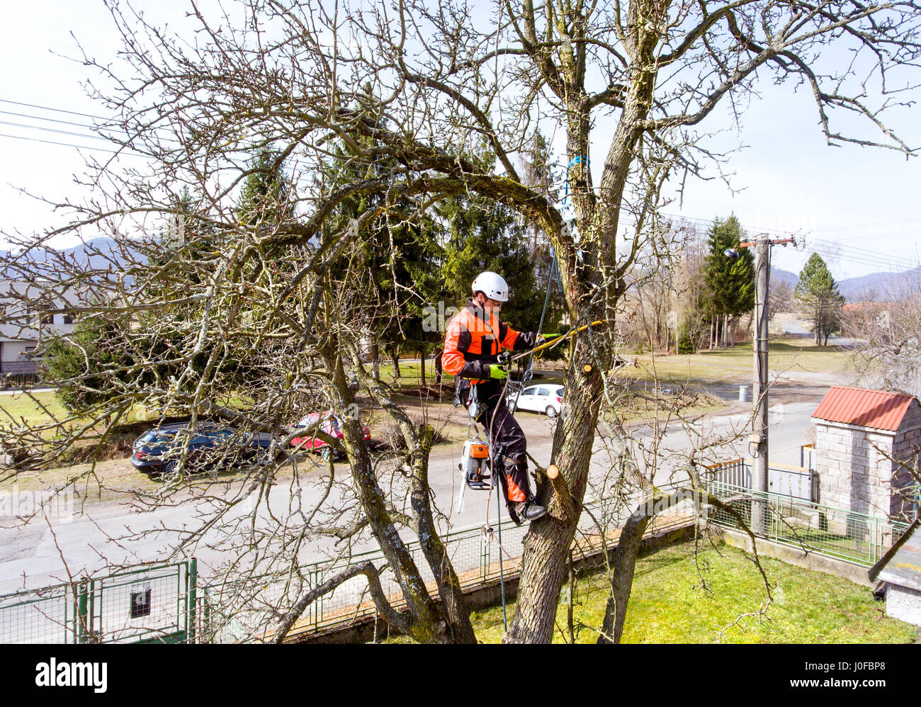 Lumberjack with a saw and harness for pruning a tree. A tree surgeon, arborist climbing a tree in order to reduce - Stock Image