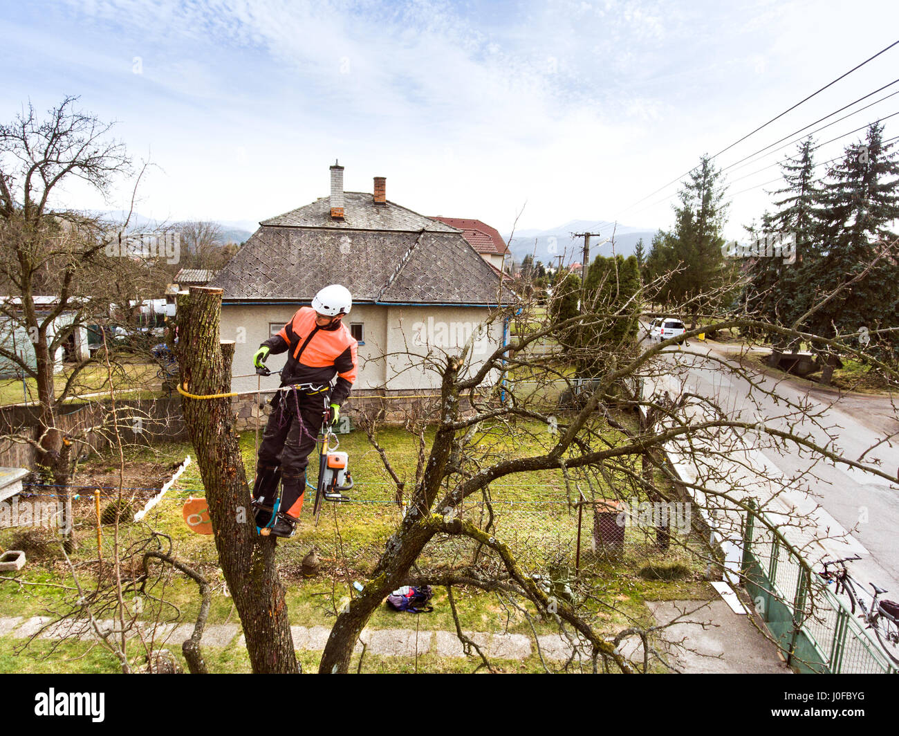 Lumberjack with chainsaw and harness pruning a tree. Arborist cuting tree branches. - Stock Image