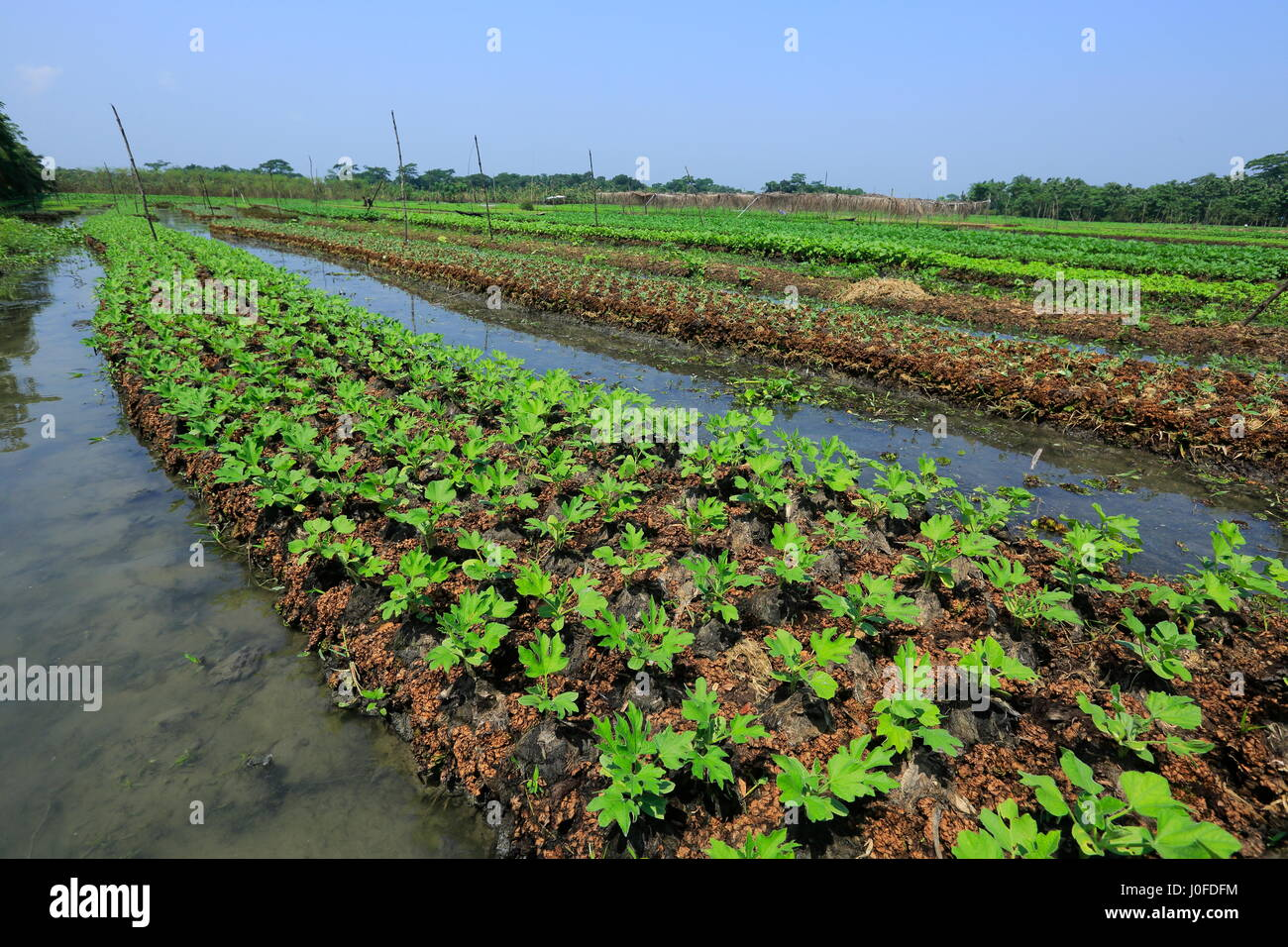 ve ables growing on floating seedbeds made from water hyacinth at J0FDFM
