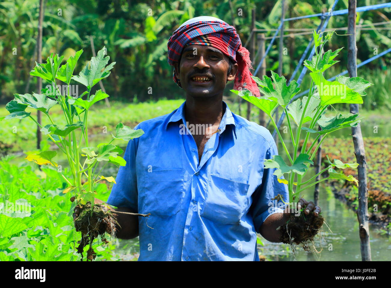 a farmer holds seedlings from the floating bed at nazirpur in pirojpur J0FE2B