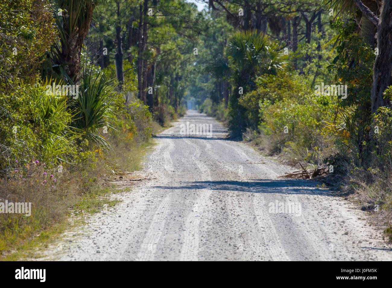 Road in Babcock/Webb Wildlife Management Area in Punta Gorda in Southwest Florida - Stock Image