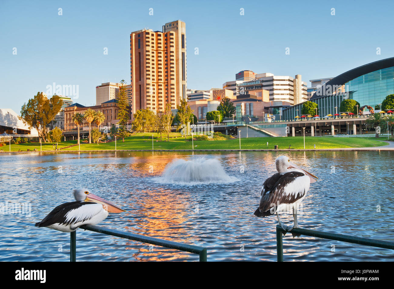 Pelicans on Lake Torrens in Adelaide City. - Stock Image