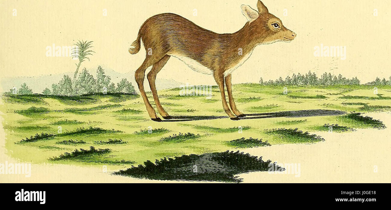 'Die Säugthiere in Abbildungen nach der Natur' (1774) - Stock Image