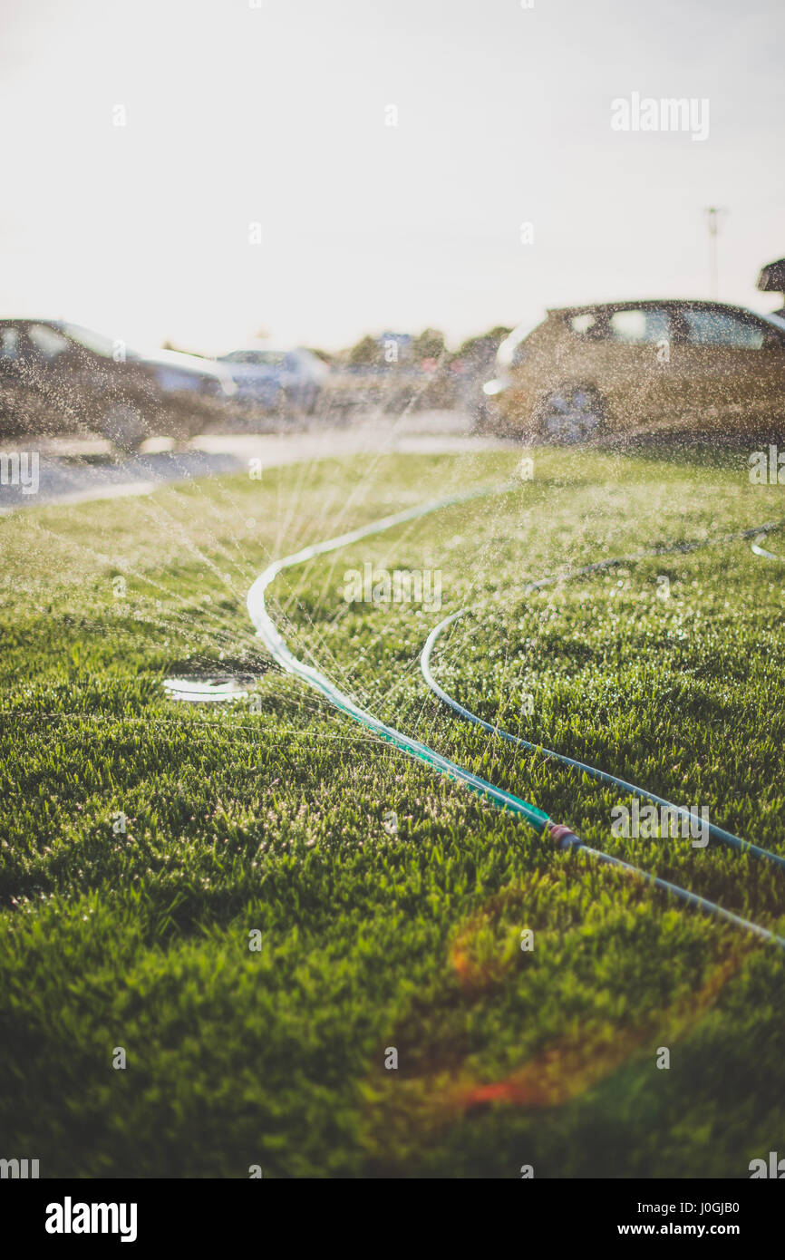 water spraying from garden hose on a hot summer day - Stock Image