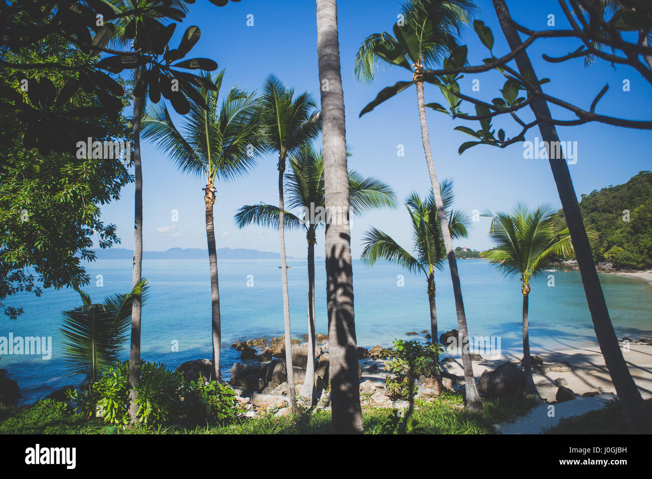 Private beach view with palm trees on a hot day - Stock Image