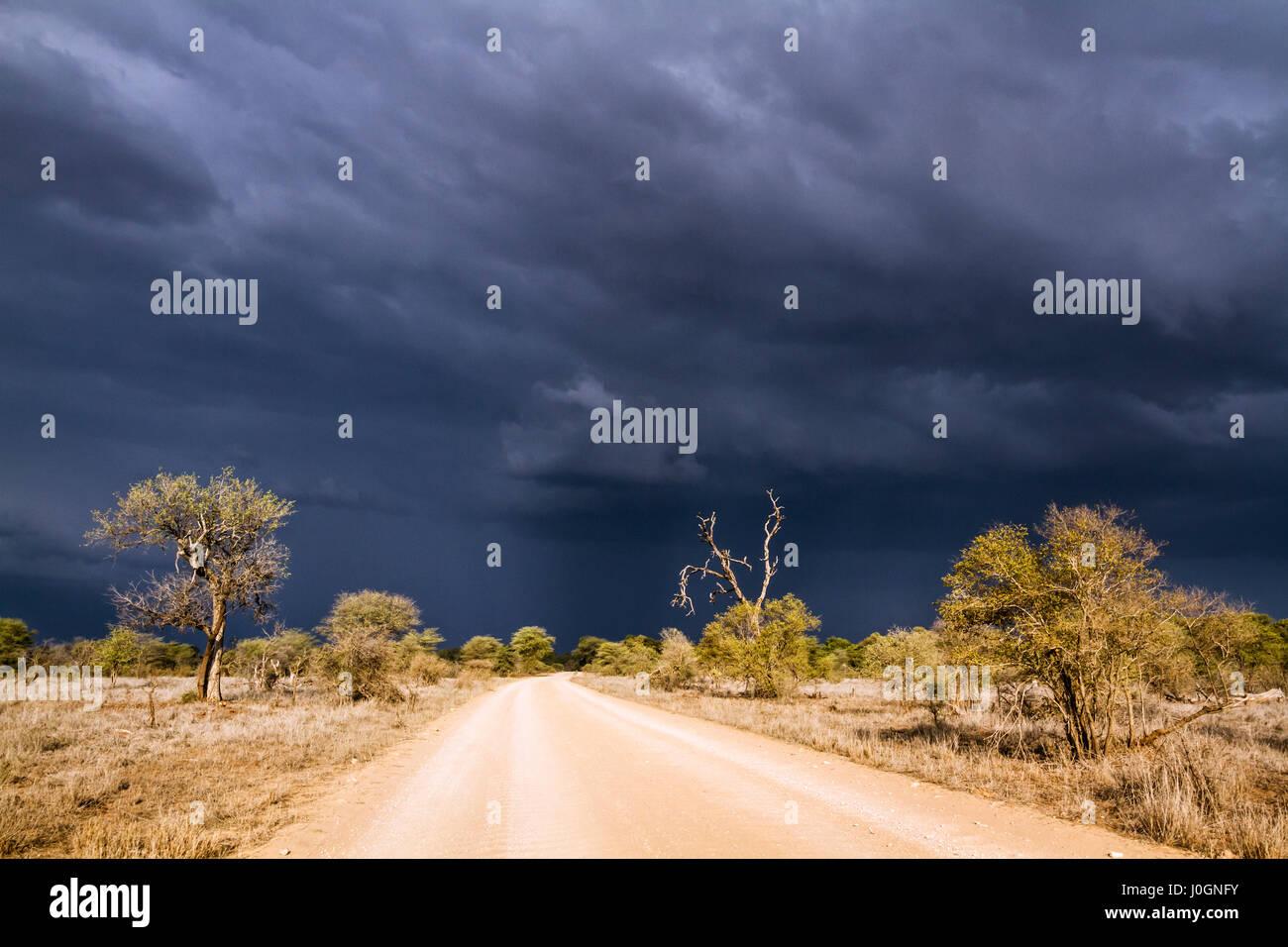Safari gravel road  in Kruger national park, South Africa - Stock Image
