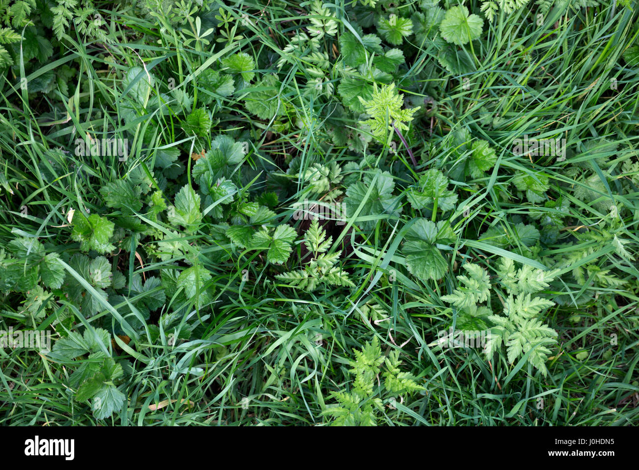 British wildflowers, mixed foliage in spring. - Stock Image