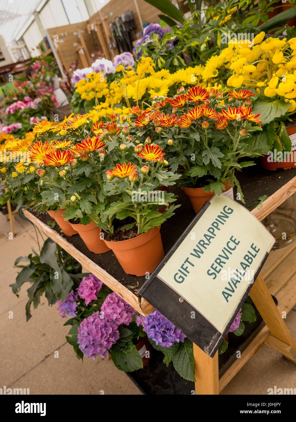 'Gift wrapping service available' sign on Flowering plants display for sale at garden centre - Stock Image
