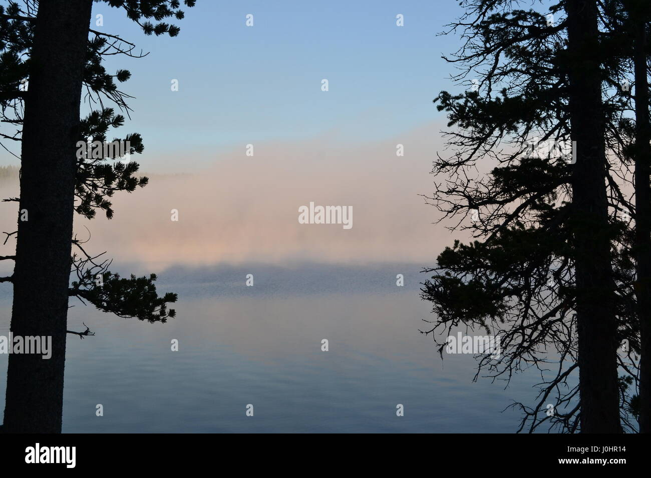 Lake mists between the trees - Stock Image