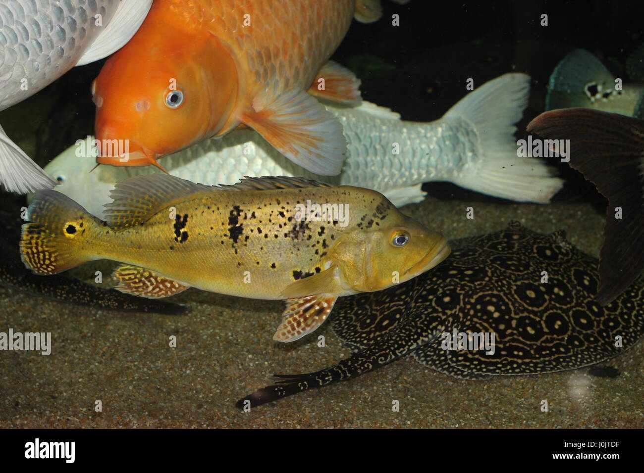 When there are a lot of fish in the aquarium Stock Photo
