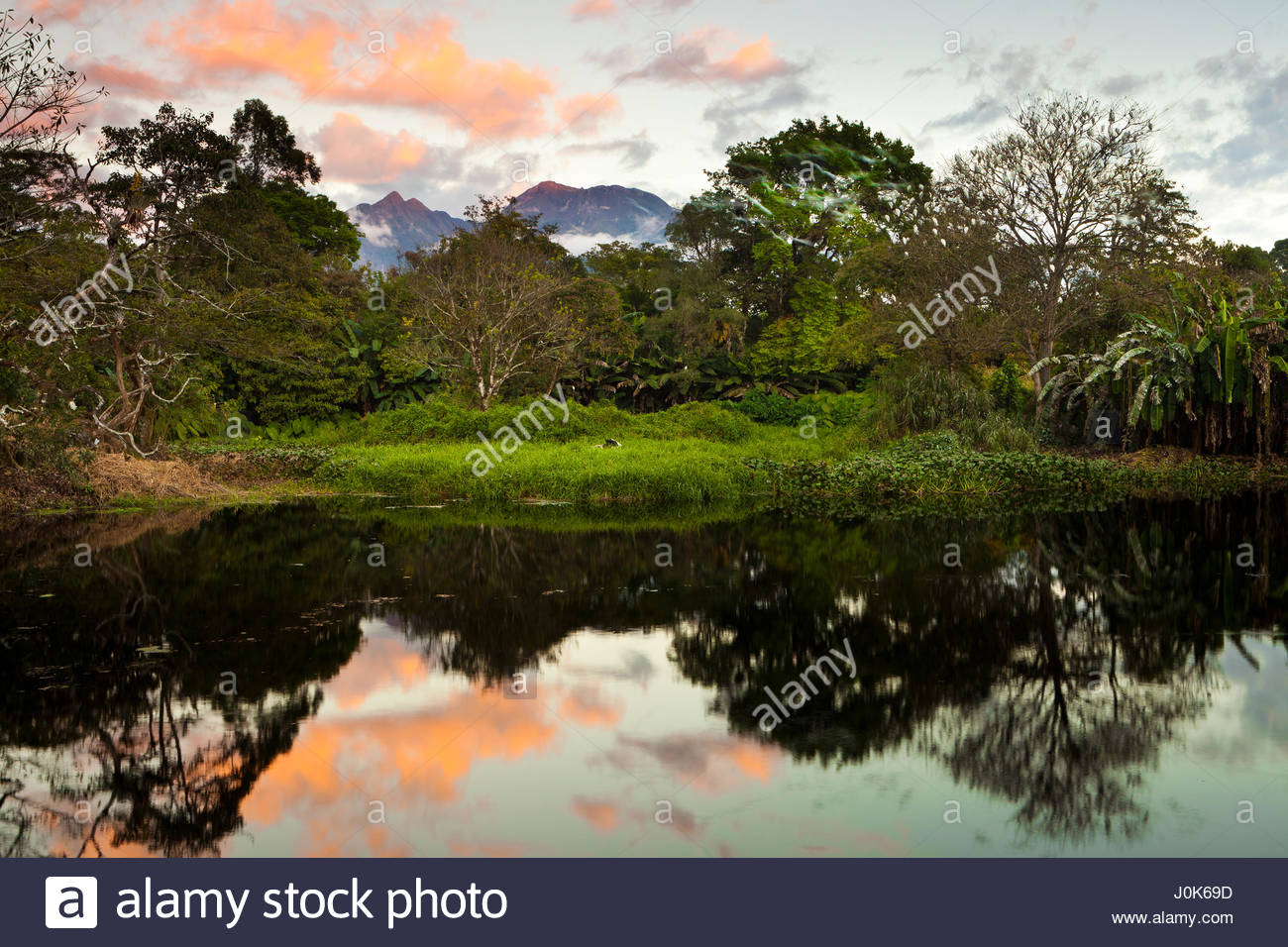 Trees and mirrored reflections, and last light on Volcan Baru, 3475 m, the highest point in Panama. - Stock Image