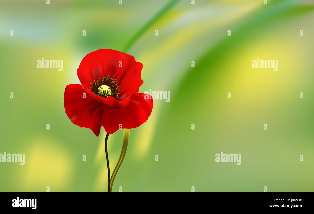 The flowers of red poppy closeup on blur background. - Stock Vector