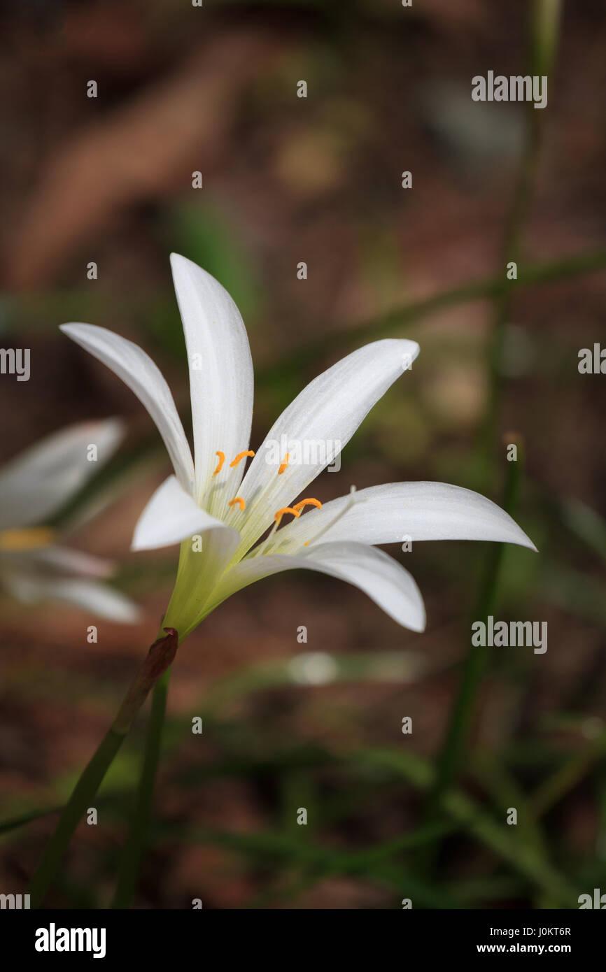 North Carolina Botanical Garden Stock Photos & North Carolina ...