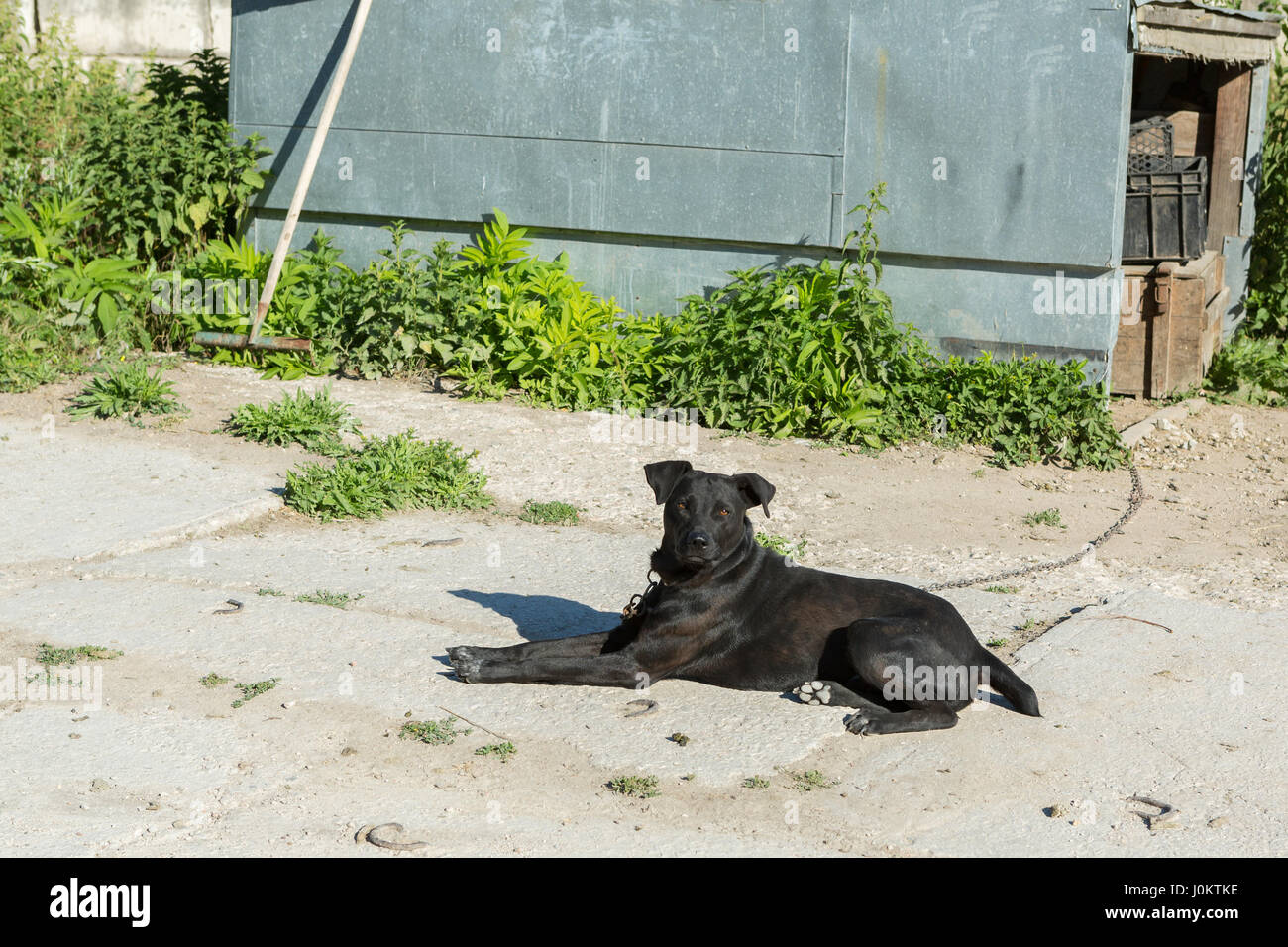 Black dog on the chain near booth - Stock Image