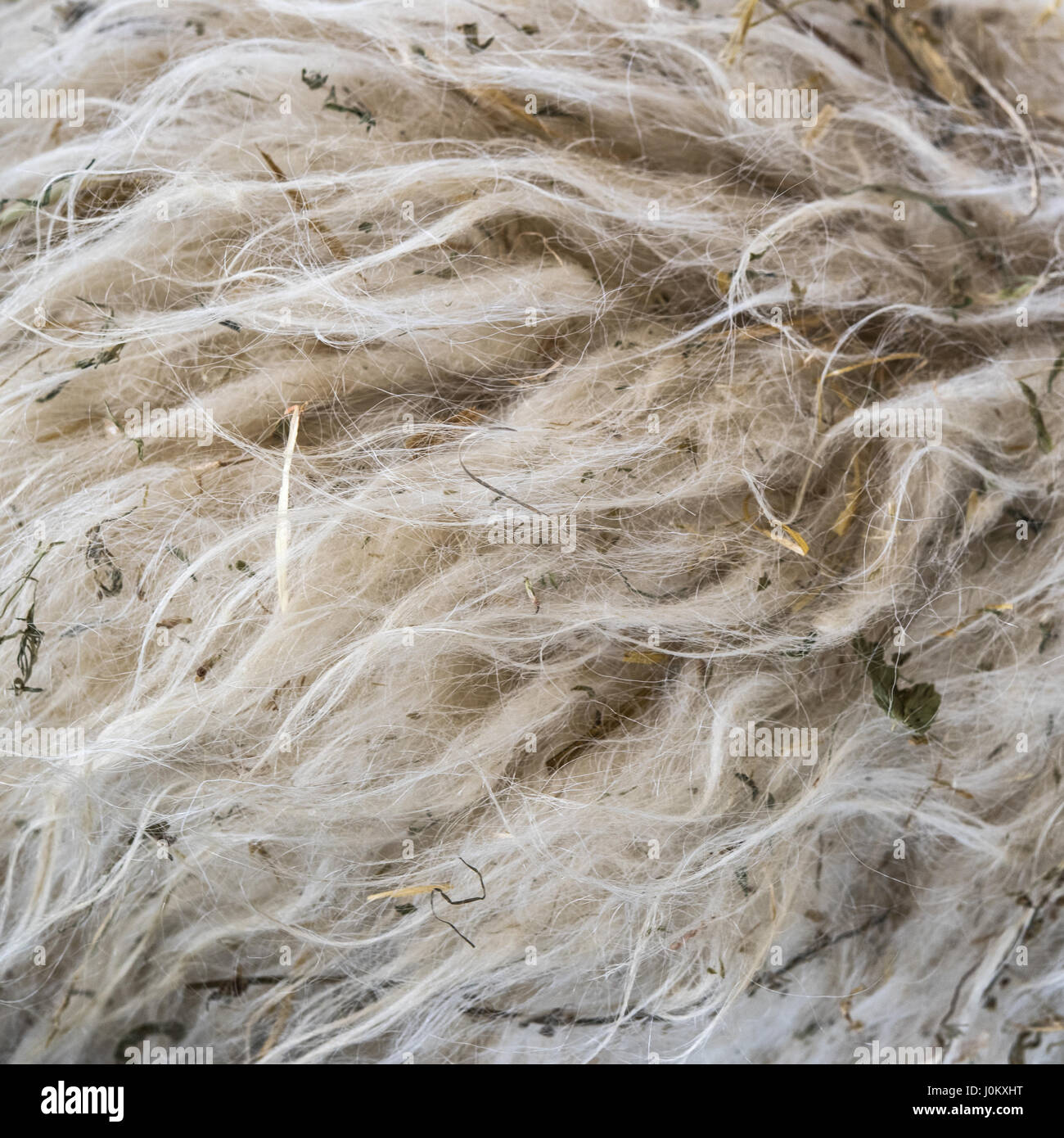 Pile of unprocessed high quality New Zealand wool. - Stock Image