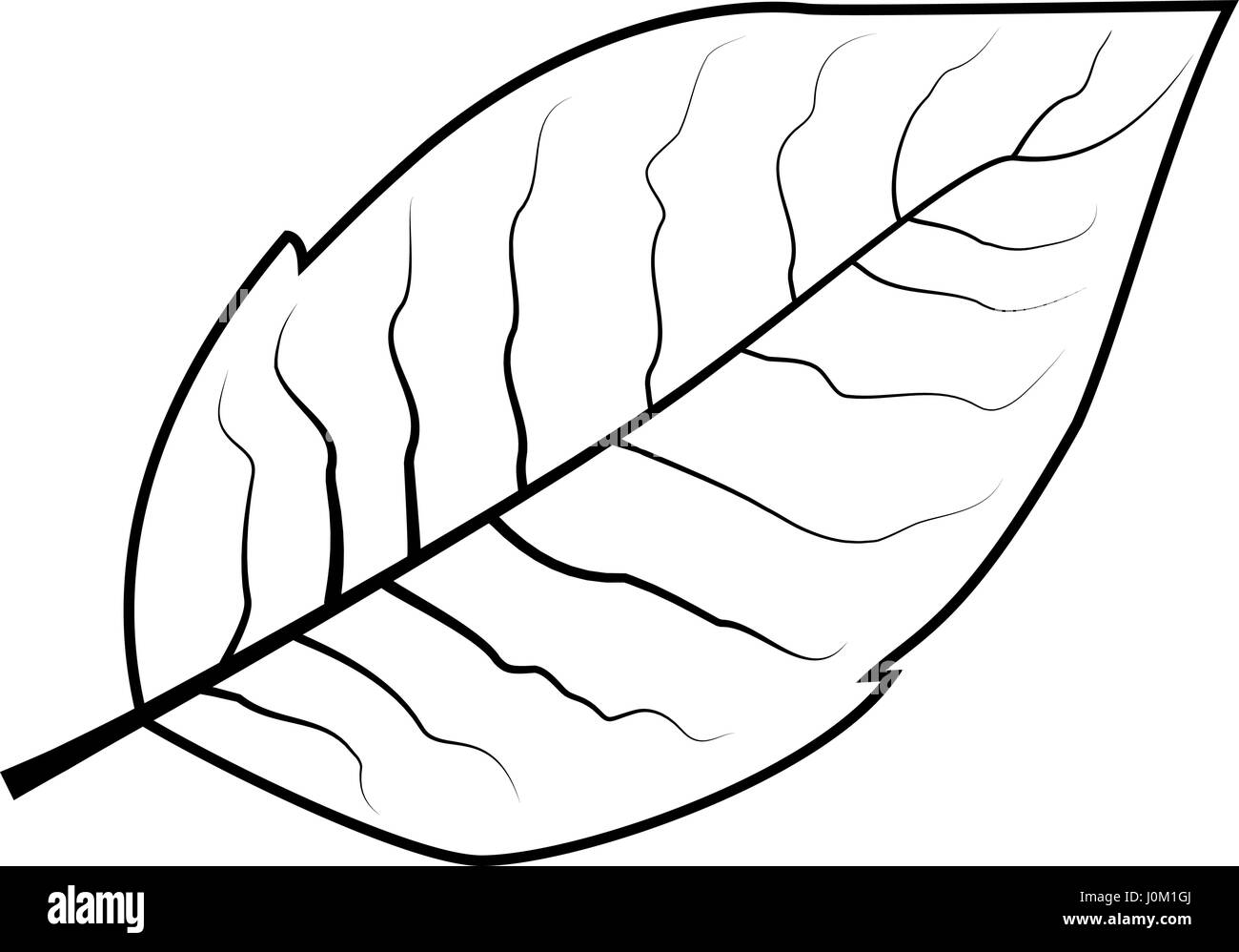 tobacco leaf vector illustration - Stock Image