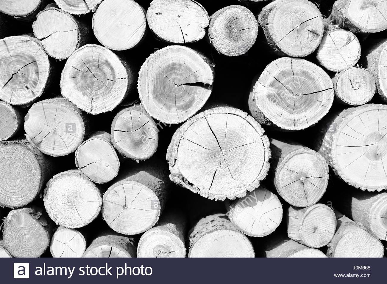 abstract of wood in black and white - Stock Image