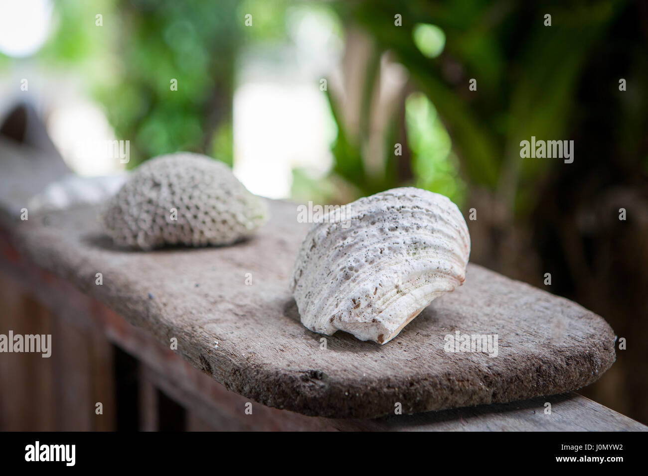 White natural coral interior on wooden surface and beautiful way to decorate a room Stock Photo