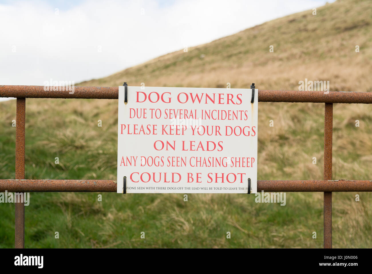 Dogs not on leads chasing sheep warning sign there their misspelling - Stock Image