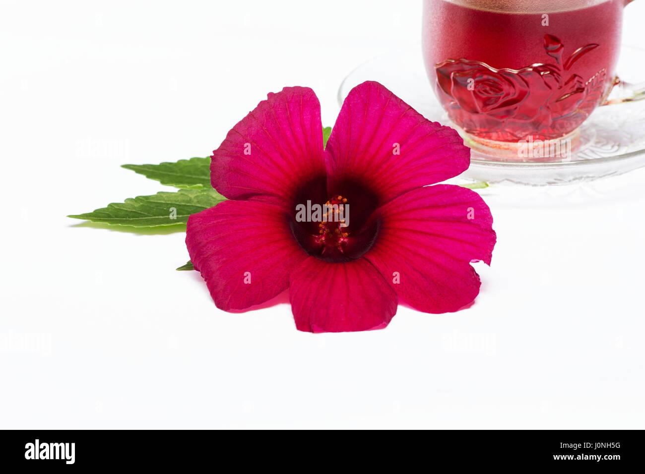 Roselle hibiscus sabdariffa flower and tea on white background roselle hibiscus sabdariffa flower and tea on white background izmirmasajfo