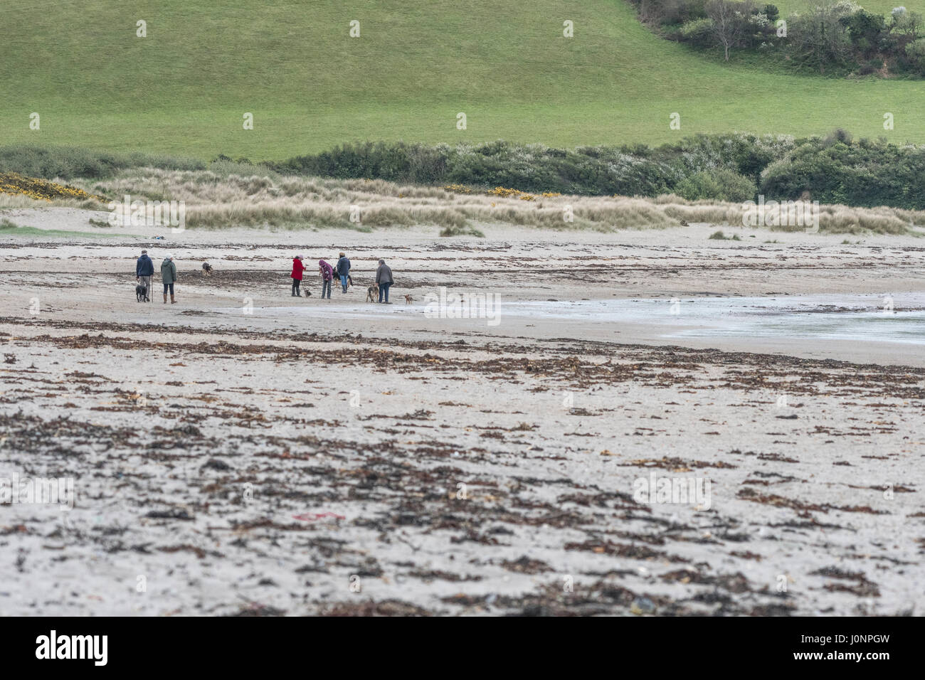 Various dog owners walking their pets on Par Beach, mid-Cornwall. - Stock Image
