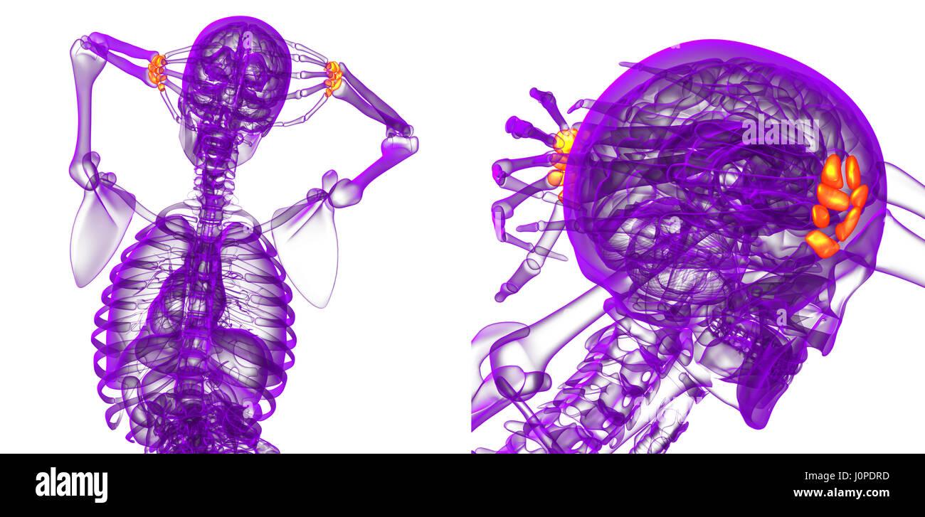 3d rendering medical illustration of the carpal bone Stock Photo ...