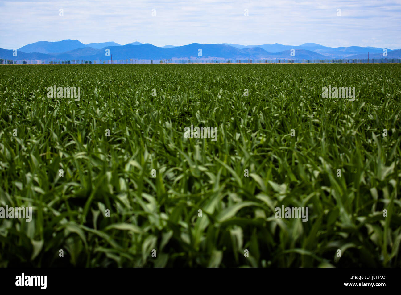 A line of distant mountains sit in the distance of the Liverpool Plains, NSW, Australia - Stock Image
