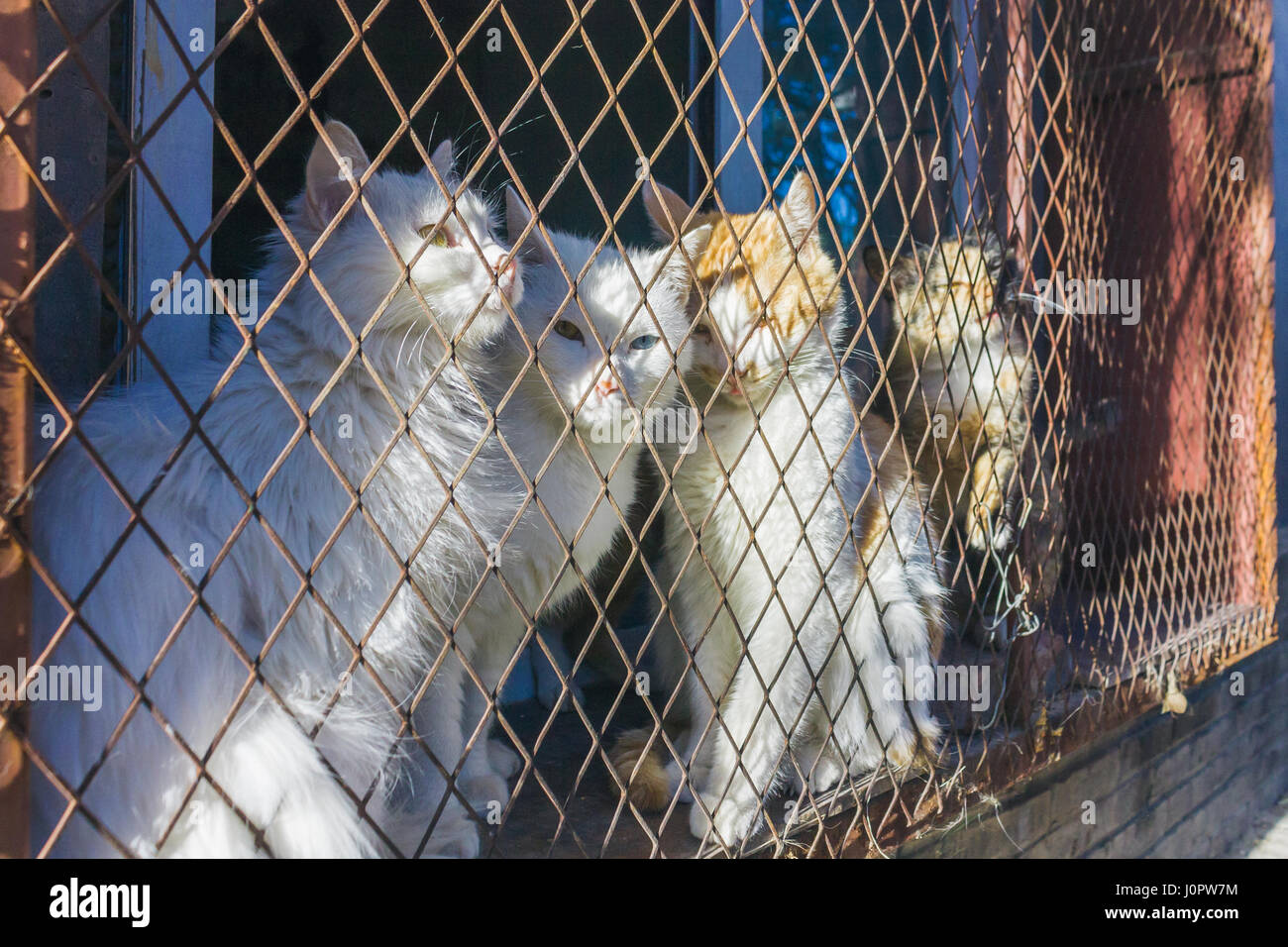 Wire Cages Trapping Cats Data Wiring Plumbingwarehousecom Delta Bathroom Faucet Parts For Model 2540 Trap And Is Stuck In A Steel Netting Cage Hoping Stock Rh Alamy Com Bobcat Bait Live Animal Traps