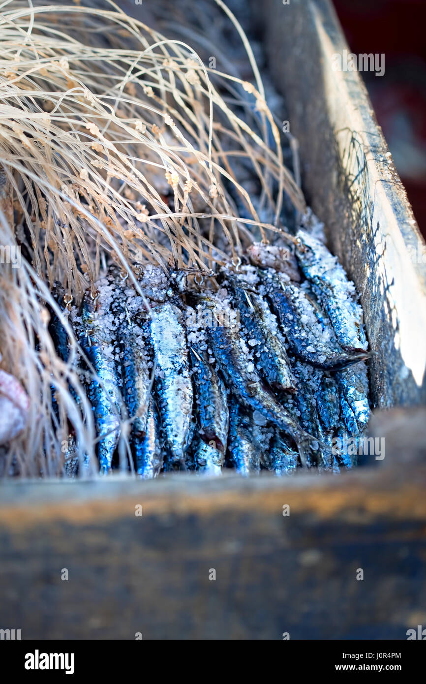 Worker holding box with salted sardines in fishing village - Stock Image