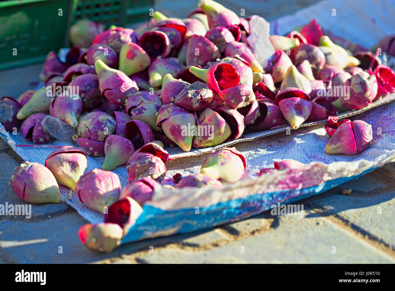 Opuntia prickly pear fruit - Stock Image